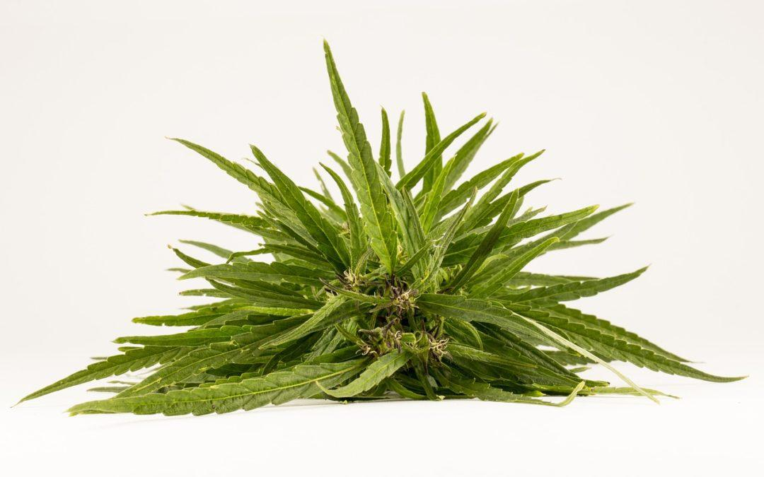 Are You a Good Candidate for CBD Oil? Find Out Here!